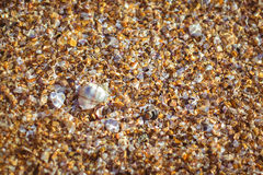 Shell and pebble stone Royalty Free Stock Photography