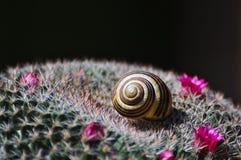 Shell pequeno do caracol que encontra-se nos pontos do cacto Imagem de Stock Royalty Free