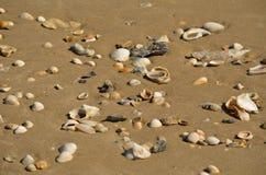 Shell pequeno na areia fotografia de stock