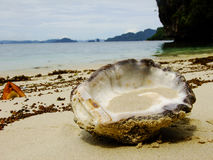 Shell in the Philippines. Shell on the Shore of Island in the Philippines Royalty Free Stock Photography