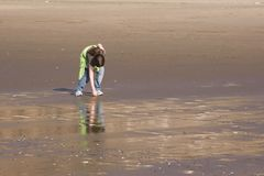 Shell Picking. A girl picks up shells on the beach Royalty Free Stock Images