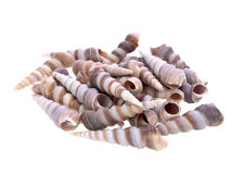 Shell pile Stock Photography