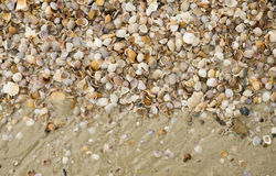 Shell pile Royalty Free Stock Photography
