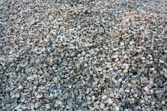 Shell pile on ground Royalty Free Stock Photo