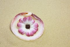 Shell and pink flower Royalty Free Stock Images