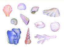 Shell pintados à mão e corais da aquarela no fundo branco, ilustração dos animais de mar ilustração do vetor