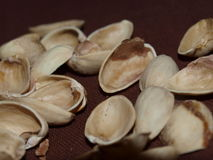 Shell pistachios Stock Image