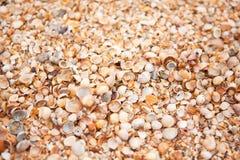 Shell plaży tekstura Pojęcie podróż, czas wolny, relaks Tło z kopii przestrzenią dla projekta mockup, screensaver dla przyrządu obrazy stock
