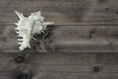 Shell on the plank. Shell on the wooden plank Stock Photo