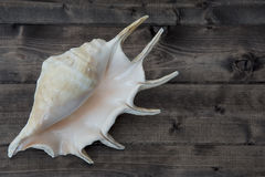Shell on the plank. Shell on the wooden plank Royalty Free Stock Image