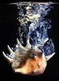 Shell plons Stock Fotografie