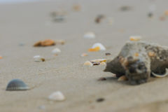 The shell and pulpy waves sea white beach ,. Thai sea and a shellfish that float to come to with waves Stock Photos