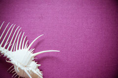 Shell on purple background Royalty Free Stock Images