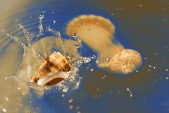Shell que cae en agua de mar Imágenes de archivo libres de regalías