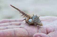 Shell que colocam sobre do homem das mãos Imagem de Stock Royalty Free