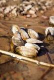 Shell que miente en la arena Fotos de archivo