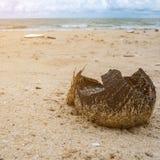 Shell quebrado del coco fotografía de archivo libre de regalías