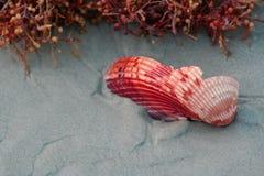 Shell quebrado del mar Foto de archivo libre de regalías