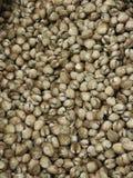 Shell Raw Food Imagen de archivo libre de regalías