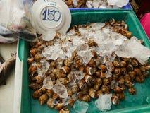 Shell Raw Food Fotografía de archivo libre de regalías