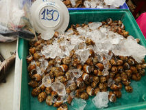 Shell Raw Food Fotografia Stock Libera da Diritti