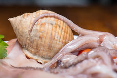 Shell and raw squid Stock Images