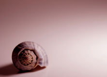Shell in red. A seashell on a rose-colored background Stock Photo
