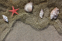 Shell and red starfish on fishing net on sand Royalty Free Stock Photography