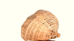 Shell redondo do mar no branco, rotação, fim acima video estoque