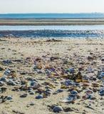 Shell regardent sur la plage images libres de droits