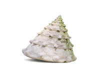 Shell resemble a fir tree. Isolated on white Stock Photography