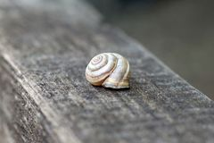 Shell resting on wooden stump at the forest in summer. Beautiful brown shell at Israel wood on the surface of the old royalty free stock photos