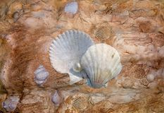 Shell rock. Structure with a shell rock Royalty Free Stock Image