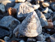Shell on the rock beach. In the afternoon at Srichang Island Chonburi, Thailand Royalty Free Stock Photography
