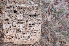 Shell rock building blocks Stock Image