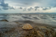 A shell on a rock in front of the sea with nice bokeh on Koh Phangan, Thailand royalty free stock photos