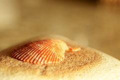 Shell on rock. Stock Photos