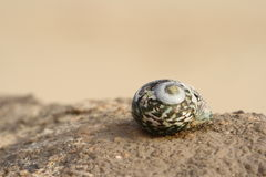 Shell on a rock Royalty Free Stock Image