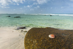 Shell on rock, Mahe, Seychelles Royalty Free Stock Photos