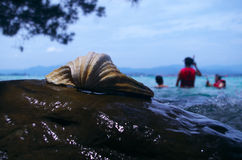 Shell on a rock Stock Photography