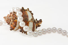 Shell and rope of pearls 1 Stock Photo