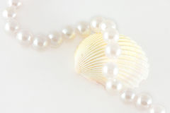 Shell and rope of pearls Stock Image