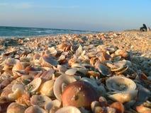 Shell rotsstrand, zonsondergang komst Stock Foto
