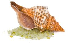 Shell with salt Royalty Free Stock Photo
