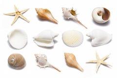 Shell samling Royaltyfri Fotografi