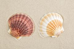 Shell Stock Photos