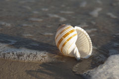 Shell on sand Stock Photo