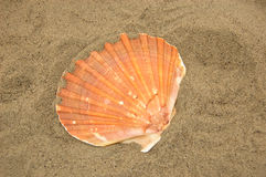 Shell in the sand Royalty Free Stock Photo
