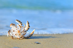 Shell on sand. Shell detail on sand  on beach in summer time Royalty Free Stock Photography