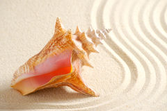Shell in sand. With line royalty free stock images